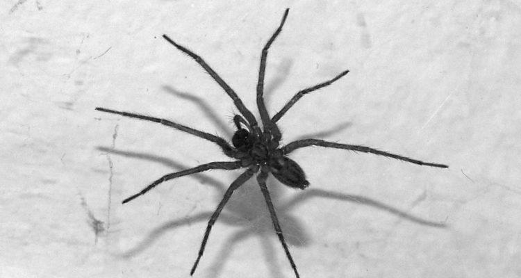 Podle Roberta Fica vypadá jeden novinář jako záchodový pavouk... Foto: Wikimedia Commons/ Luděk Kovář